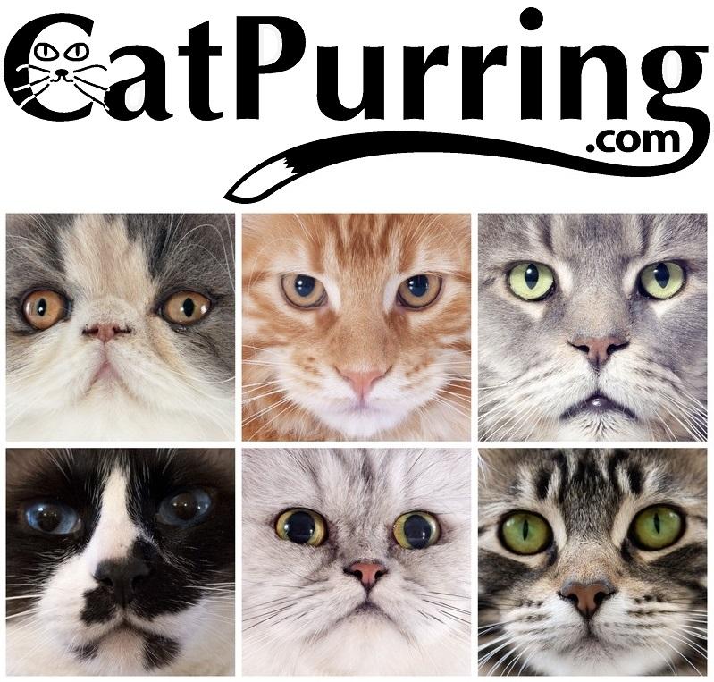 CatPurring.com