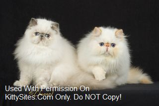Persian cat breeders sacramento ca