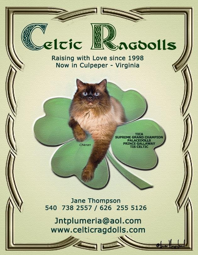 CelticRagdolls