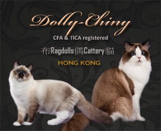 Dolly-Chiny Ragdolls