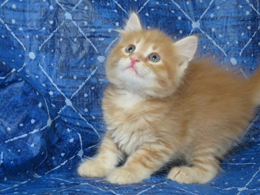 Kirigami Kittens