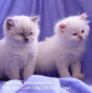 Lionzden Cattery