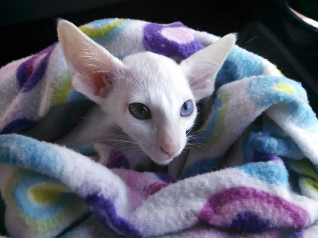 declawed cat rescue