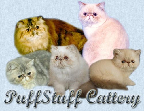 Himalayan cats for sale in charleston sc