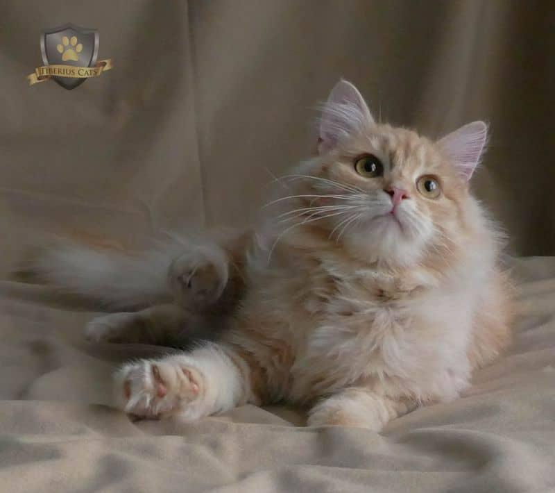 Tiberius Cats
