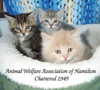 Animal Welfare Association