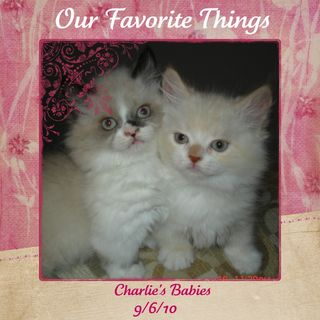 Our Favorite Things Cattery