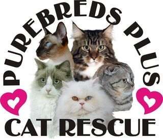 Purebreds Plus Cat Rescue