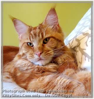 Ray du Soleil is a small Maine Coon Cattery located in the northwest suburbs