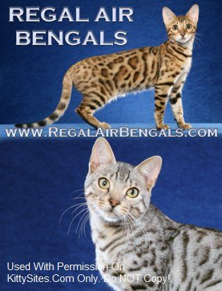 Regal Air Bengals