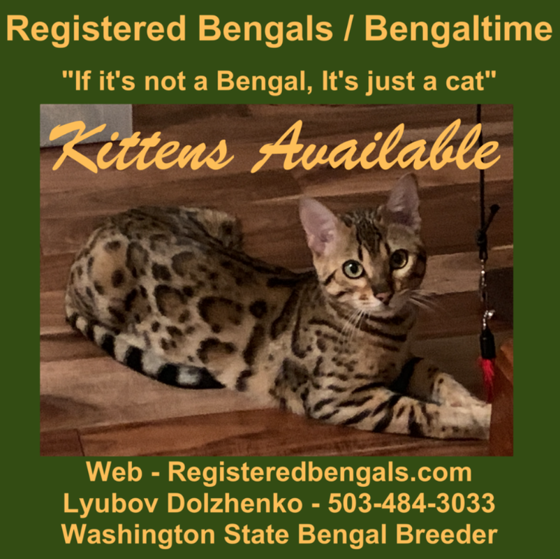 Registered Bengals / Bengaltime
