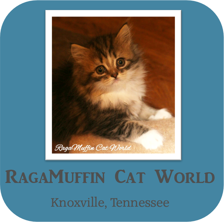 RagaMuffin Cat World