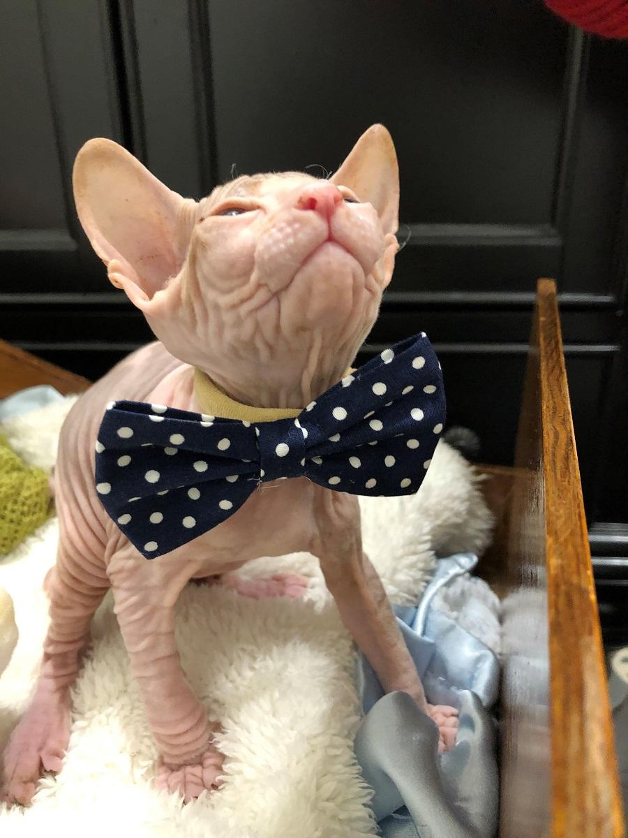 Bare Kitties Cattery