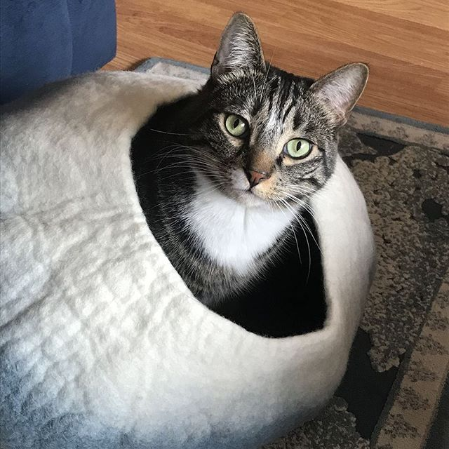 Cat Cave Co