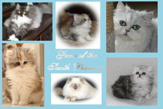 Gems of the South Persians & Himalayans