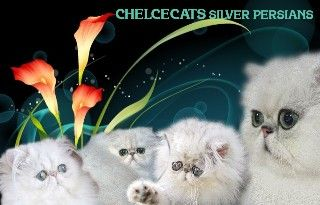 Chelcecats