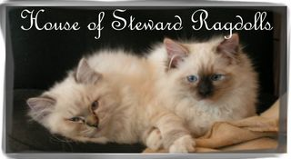 House of Steward Ragdolls