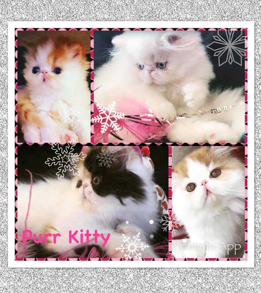 Purr Kitty Cattery