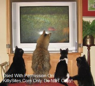 DVD Entertainment for Cats to Watch