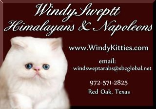 Windysweptt Cattery